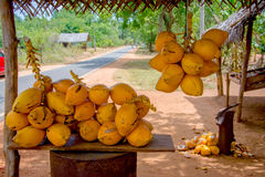 在小路旁摊位的Coconuts Are Displayed For国王出售在锡吉里耶 免版税库存图片