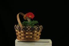 在小门篮子的红色大丁草雏菊 库存照片