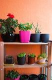 在小阳台修造的小草本和花园从事园艺 库存图片