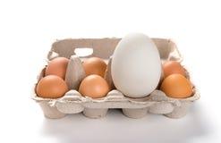 在小鸡之间的大大小鹅蛋在包裹怂恿 图库摄影