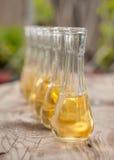 在小玻璃的李子白兰地酒在木桌上 图库摄影