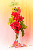 在小玻璃的红色花 免版税库存图片