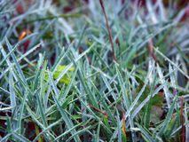 在小滴的草在雨以后 库存照片