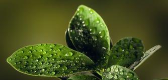 在小滴盖的叶子的特写镜头用bokeh背景 免版税图库摄影