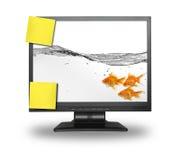 在小lcd的屏幕里面的金鱼组 库存照片