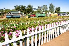 在尖桩篱栅后的花园 免版税库存照片