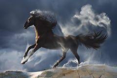 在尘土的马反对在背景的黑暗的天空 免版税库存图片