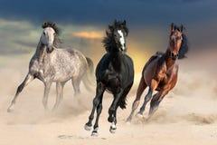 在尘土的马 免版税库存照片