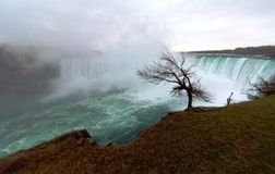 在尼亚加拉瀑布的树在加拿大 库存图片