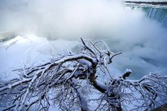 在尼亚加拉瀑布附近的ised树在冬天 免版税库存照片