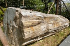 在尼娜Woodfossil公园的木化石在香港 库存照片