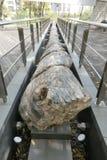 在尼娜Woodfossil公园的木化石在香港 库存图片