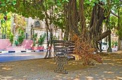 在尼罗Corniche的榕树 免版税图库摄影