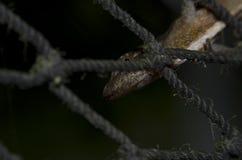 在尼龙网的壁虎蜥蜴 免版税库存照片
