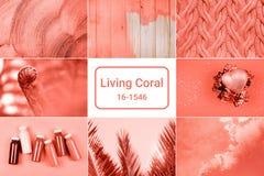 在居住的珊瑚颜色的创造性的拼贴画 库存照片