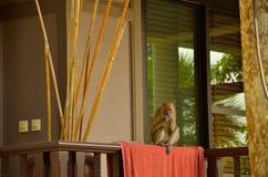 在屋子前面的猴子 免版税库存照片