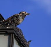 在屋顶上面的一只小的鸟 库存照片