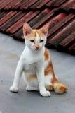 在屋顶上面的一只猫 免版税库存图片