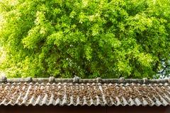 在屋顶上面的干燥叶子 免版税库存照片