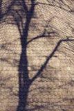 在屋顶上面的树阴影 免版税图库摄影