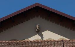 在屋顶特写镜头的山墙饰的马头在佛罗伦萨,意大利 免版税图库摄影