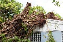 在屋顶登陆的树 免版税库存照片