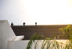 在屋顶的三只鸟 图库摄影