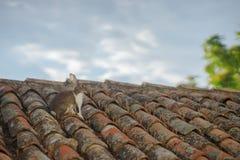 在屋顶的兔子 库存图片