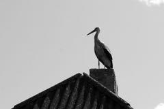 在屋顶的单独鹳 免版税库存图片