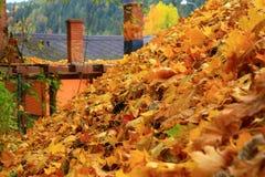 在屋顶的叶子 图库摄影