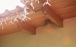 在屋顶的圆的黄蜂巢 免版税库存照片