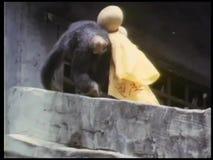 在屋顶的恶作剧猴子 影视素材