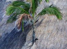 在屋顶的棕榈树 免版税库存图片