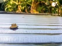在屋顶的特写镜头老黄色头 免版税图库摄影