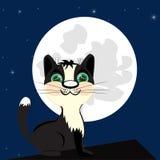 在屋顶的猫夜 免版税库存照片