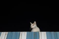 在屋顶的猫夜 图库摄影
