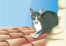 在屋顶的猫看 免版税库存图片