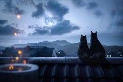在屋顶的猫观看满月的 免版税库存照片