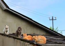 在屋顶的猫 免版税库存图片