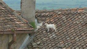 在屋顶的猫 股票录像
