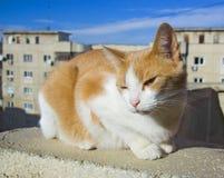 在屋顶的猫 库存照片