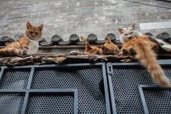 在屋顶的猫 免版税库存照片