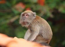 在屋顶的猴子 免版税库存照片