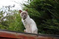 在屋顶的美满的猫 库存图片