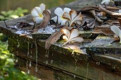 在屋顶的羽毛白花 免版税库存图片