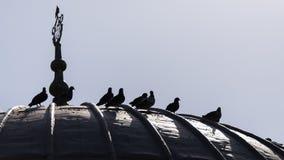 在屋顶的鸟 免版税库存图片