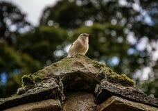 在屋顶的鸟 免版税图库摄影