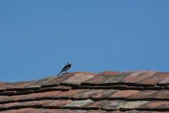 在屋顶的鸟 免版税库存照片