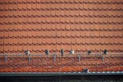 在屋顶的鸽子 免版税图库摄影