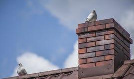 在屋顶的鸽子 免版税库存图片